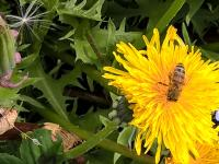 mongeat-biodiversite-04